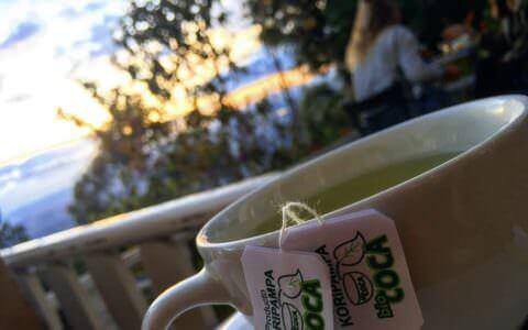 How to consume coca tea?