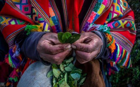 Coca leaf use throughout history: A timeline
